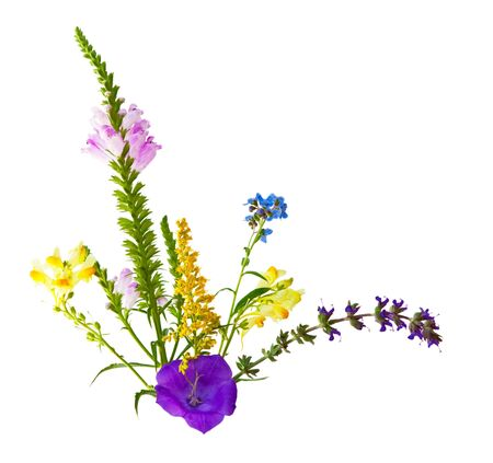 pedicel: Colorful wild flowers isolated on white background Stock Photo