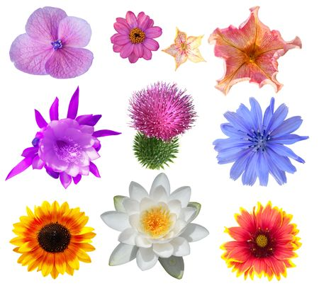 Set of flower heads isolated on white photo