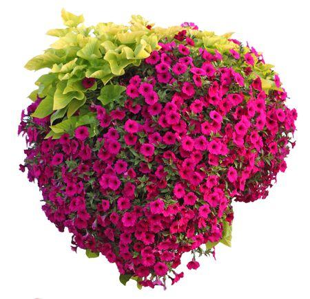 挂满五角花和山药叶的篮子