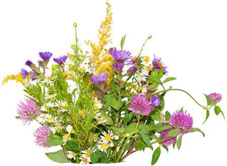 trifolium: Bundle of wild flowers isolated on white background