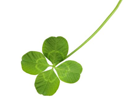 four objects: Shamrock four leaf clover isolated on white