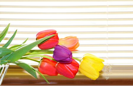 Tulip flowers on the basket by the window blinds