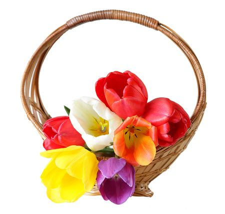 Fresh colorful tulip flowers in the basket Stock Photo - 5831680