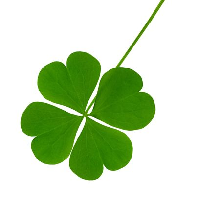 lucky clover: Single lucky shamrock leaf isolated on white Stock Photo