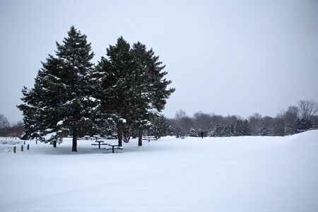 Evergreen pine trees in the park winter time Stock Photo - 6073306
