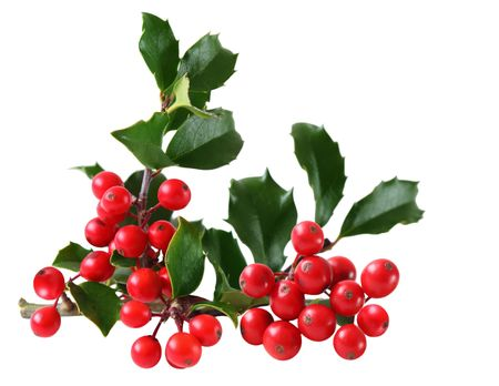 Holly Berry and Leaves isolated on white background photo