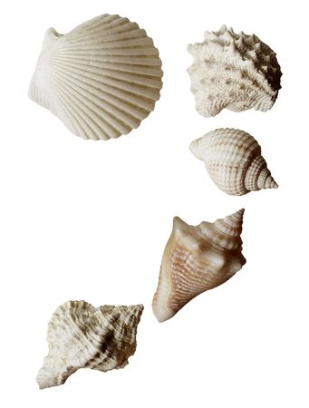 Set of sea shell isolated on white Stock Photo - 6239297