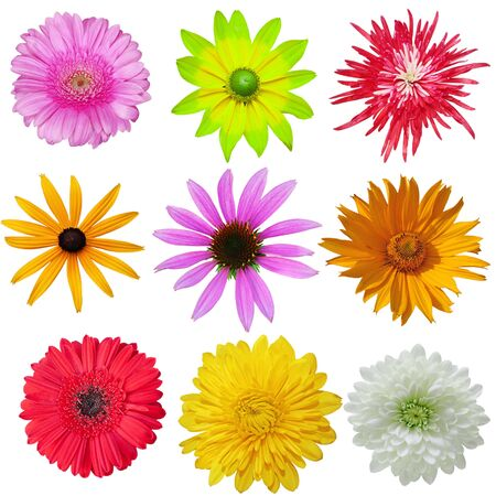 Daisy flowers set isolated on white background photo