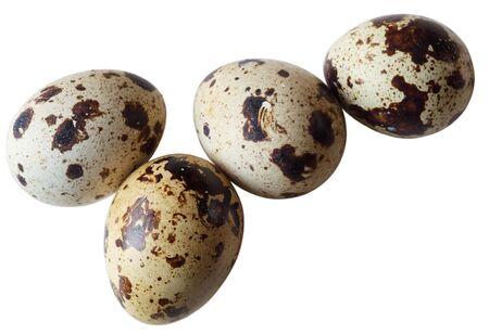 huevos de codorniz: Cuatro huevos de codorniz aislados sobre fondo blanco  Foto de archivo