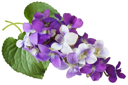 Bundle of blue, white, and purple wild violet flowers