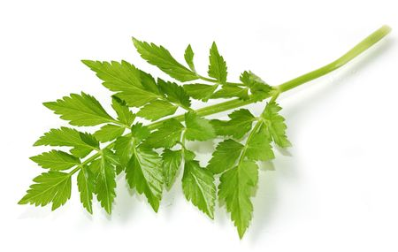khan: Chinese khan choy celery leaf isolated on white