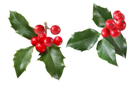 Set of  holly sprigs isolatead on white background photo