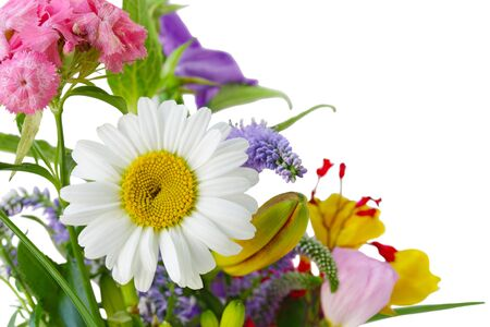 Daisy and colorful flowers for natural background