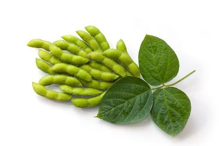 Verse sojabonen in de peulen met bladeren Stockfoto