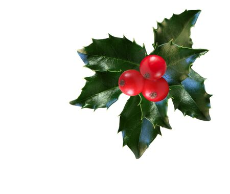 christmas berries: Holly leaves and berries isolated on white background Stock Photo
