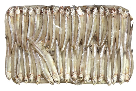 anchovy fish: Fresh anchovy fish isolated  on white background Stock Photo