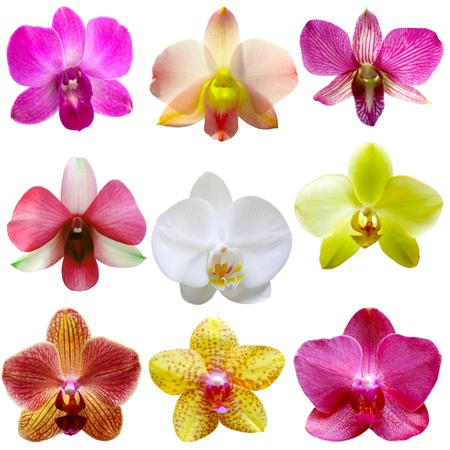 Collection of orchid flower isolated on white Stock fotó