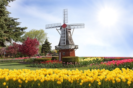 moulins   � vent: Windmill sur le champ de tulipes au printemps Banque d'images