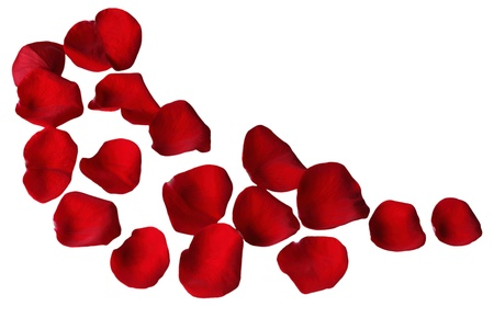 Red rose petals on a curve