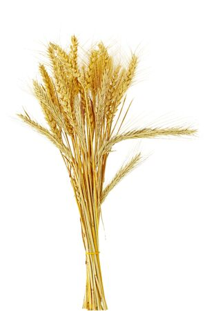 beardless: Bundle of different kind of cereal grains and grasses Stock Photo