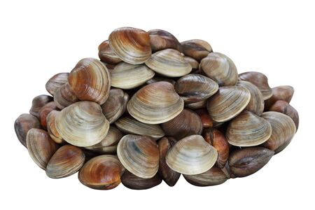 Pile of live clams isolated on white