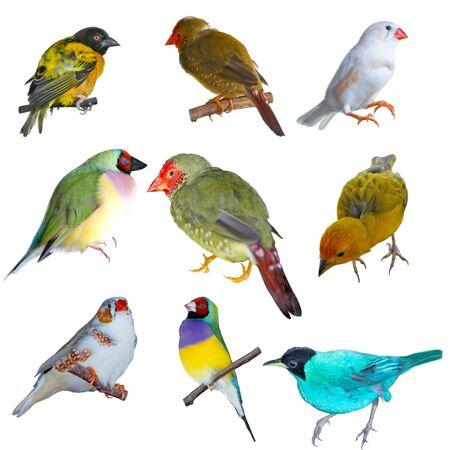 Set of small birds isolated on white back ground photo