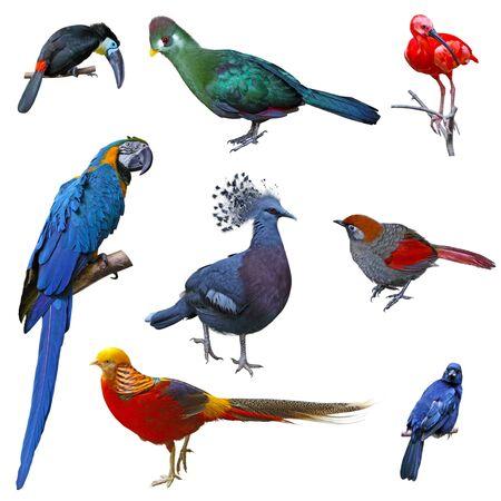 Set of tropical big birds isolated on white photo