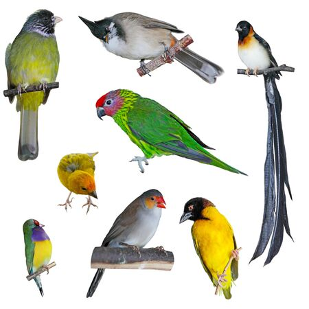 Collection of birds isolated on white background photo