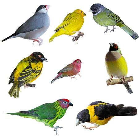 Set of small birds isolated on white background photo