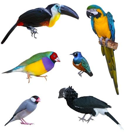 白で隔離される熱帯の大きな鳥のコレクション