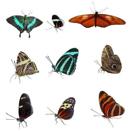 흰 배경에 고립 된 나비