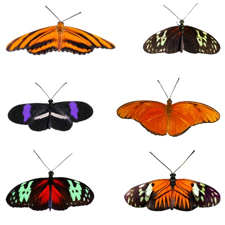 Nine of butterflies isolated on white Stock Photo - 9297049