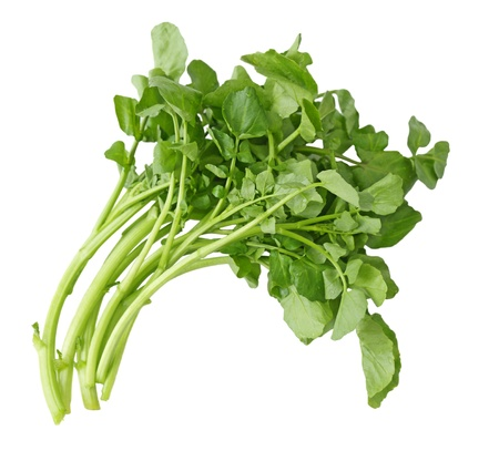 Fresh Watercress isolated on white background photo