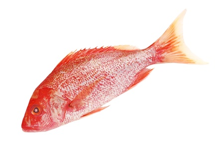 food fish: Raw Red snapper isolated on white background