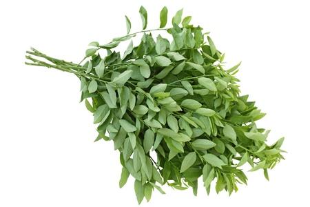 Edible sweet leaf bush sauropus androgynus