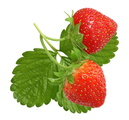 homegrown: Homegrown strawberries with leaf isolated on white