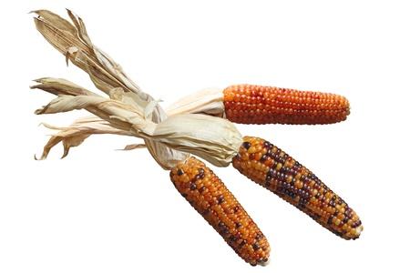 3 つのカラフルな白で隔離されるインドのトウモロコシを乾燥 写真素材