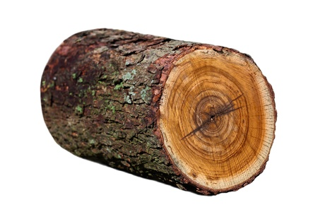 log on: Redbud wood log isolated on white Stock Photo