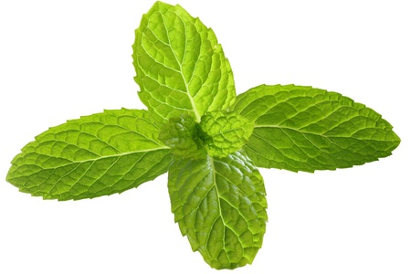 Fresh mint leaves for garnish isolated on white photo