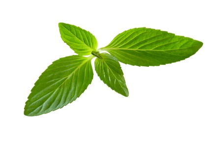 spearmint: Spearmint mint leaf isolated on white background Stock Photo