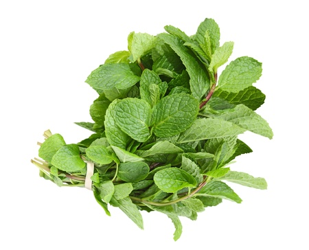 Fresh common herb mint bundle isolated on white  photo