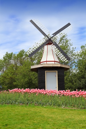 Windmill on tulip flower hill in spring time