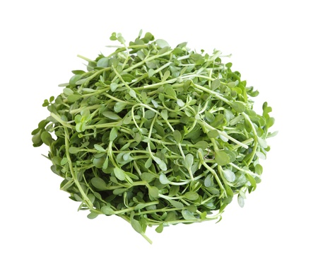 Bacopa monnieri、苦い葉 = ブラフミー文字・ Waterhyssop タイム葉 gratiola、水ヒソップ、苦いハーブの山