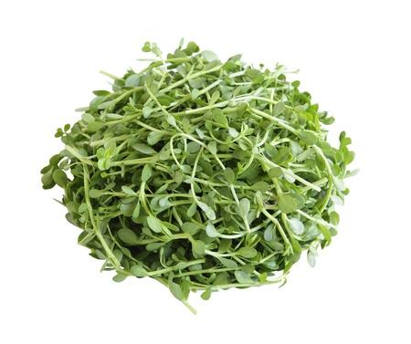 Pile of Bacopa monnieri, Bitter Leaf, Waterhyssop, Brahmi, Thyme-leafed gratiola, Water hyssop, bitter herb