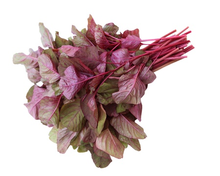 Amaranthus Tricolor Vietnamese Red Spinach isolated on white
