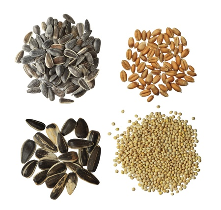 heap: Collection of four raw grains broomcorn millet, wheat, rye, sunflower seeds isolated on white
