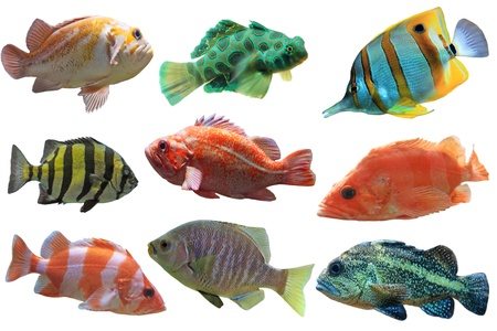 Collage of aquarium fish isolated on white background photo