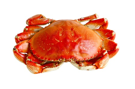 Boiled prepared crab isolated on white background Stock Photo - 21449430