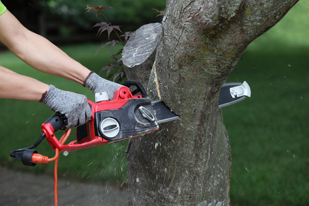 lumberman: Chainsaw in action cutting a trunk