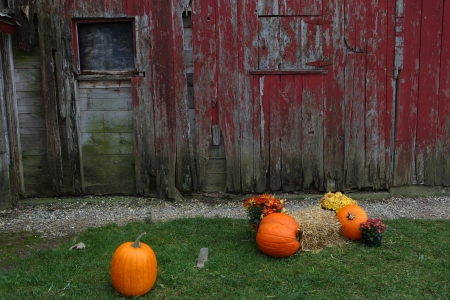 Pumpkins at red dirty old barn photo